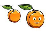 Cute happy orange apricot fruit