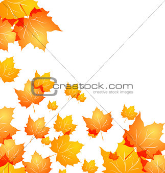 Autumn background with flying maples