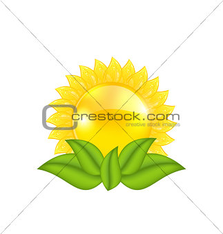 Abstract sun with green leaves, isolated on white background
