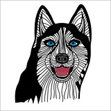 Dog husky head vector Graphics