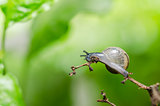Snails and tree