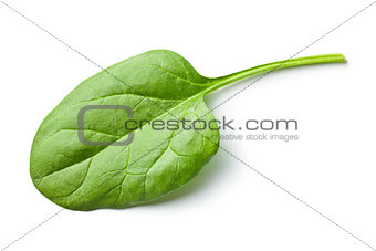 green spinach leaf