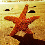 seastar in the seashore with a retro effect