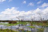 wetlands 5