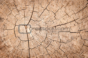 tree trunk texture or background