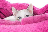white kitten in cushion
