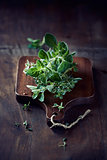 Organic Oregano and Thyme on a Chopping Board