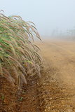 Grass flower,dew and trail under the mist in winter of Thailand