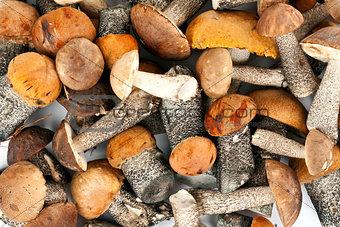 background of mushrooms