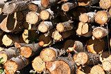 round birch wood