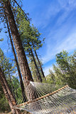 Peaceful Hammock Hanging Among the Pine Trees