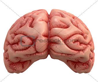 Brain Over White