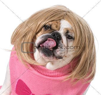 female bulldog