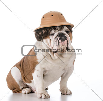 dog on safari