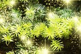 Christmas Green Pine Tree Background