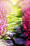Path Over Flower