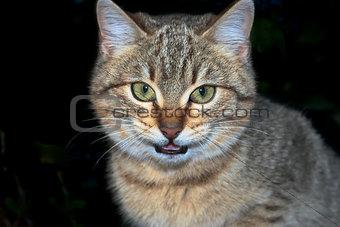 Threaten cat