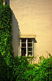 window on wall with ivy
