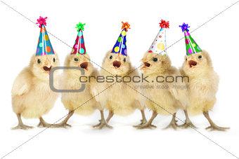 Yellow Baby Chicks Singing Happy Birthday