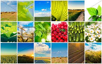 Harvest Concepts.
