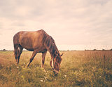 Horse On Green Grass