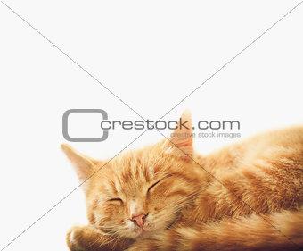 Little Red Kitten Sleeping On White Background