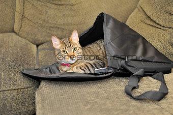 Cat in a Satchel