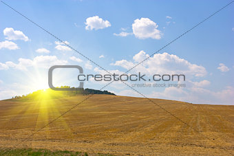 autumn yellow field and the blue sky