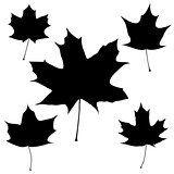Set of vector black maple leaves outline