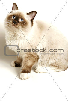 Cat on White with Soft Shadow