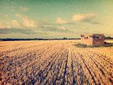 Vintage cornfield image