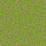 Tender Spring Grass. Seamless TileableTexture.