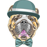 vector funny cartoon hipster dog English Bulldog breed