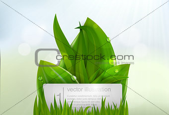 Green grass with a sign for text
