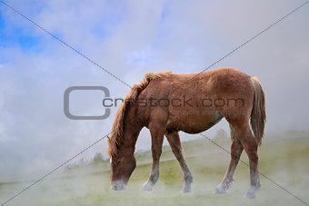 One horse in fog grazing.