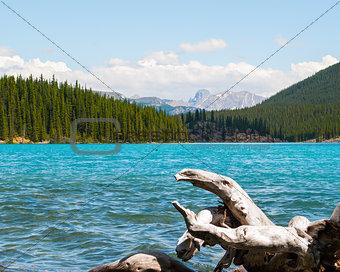 driftwood in mountain lake