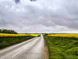 Country road with mustard fields