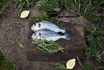 Bream fish