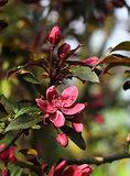 Spring garden impression