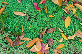 Autumn leaves on green grass