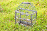 Cage for birds on a green  grass
