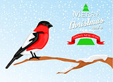 Christmas background with Bullfinch bird