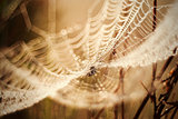 Dew on the cobweb abstract background