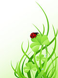 Green grass and ladybird