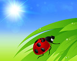 Green grass, sun and ladybird