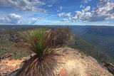 Buramoko Ridge Blue Mountains National Park Australia