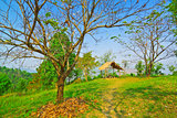 Into the peaceful garden on dry season of Thailand