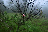 Peach tree and its flower in winter season