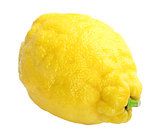 Single fresh yellow lemon