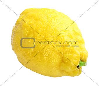 Single fresh yellow lemon